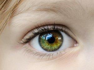 Ophthalmology Repair