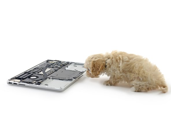 Here it is, folks—the all-new Force Touch trackpad. To put it to the test, we bring in our littlest employee, Gus the Ewok Cavapoo, to investigate.