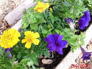 Power Flower Garden