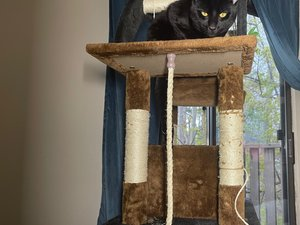 How to Refurbish Posts on a Cat Tree