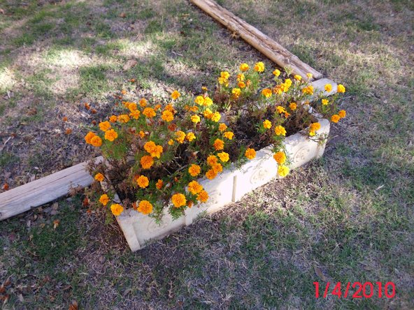 This is what the flowers look like at the end of October with only the Marigolds left in bloom.