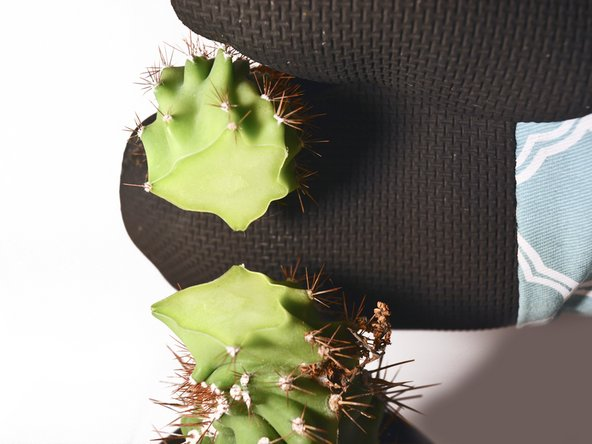 Take the broken cactus piece and reattach it carefully to the main body of the cactus.